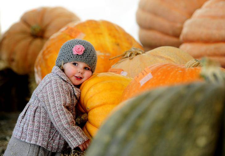 Then two-year-old Mia Buser, of Palmerston, at the 2012 Collector Village Pumpkin Festival. Picture: Melissa Adams.